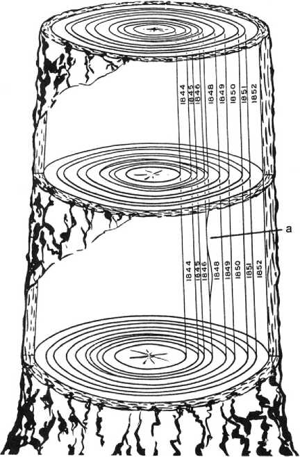 How does tree ring dating work